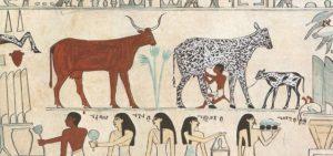 domesticación animales Egipto