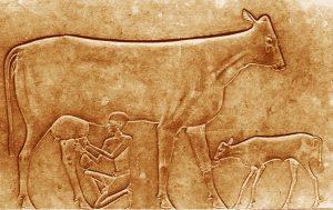 queso neolítico
