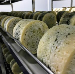 quesos el Cabriteru madurando