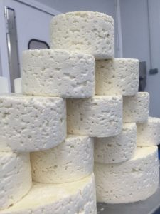 estos quesos blancos recién moldeados serán quesos azules dentro de unos meses