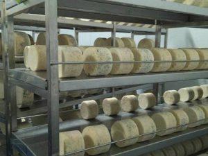 quesos azules de El Cabriteru en la cava de maduración
