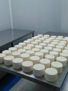 quesos recién sacados de los moldes en la Quesería artesanal El Cabriteru