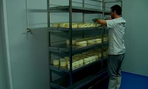 los quesos se voltean a mano uno a uno a fin de conseguir que la humedad sea homogénea