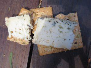 El_Cabriteru_penicillium_queso azul