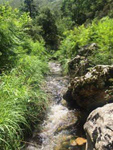 naturaleza Asturias El Cabriteru