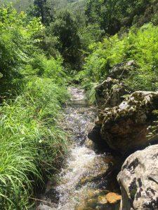 naturaleza-Asturias-El-cabriteru