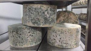 queso azul El Cabriteru madurando Arenas de Cabrales