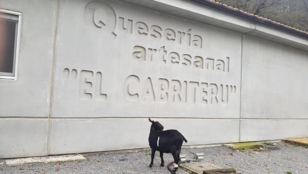 cabra blanca y negra frente a la Quesería El Cabriteru
