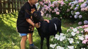 niño con cabra en granja Asturias